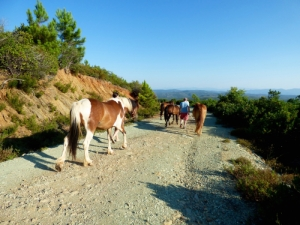 outdoor activities packages, Pelion Magnesia, equestrian club, horse-riding, hiking trails, mountain bikes, pelion neochori facilities services rooms hospitality
